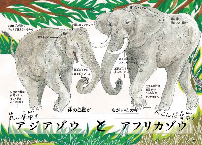 本物を動物園や水族館で確認したくなる!